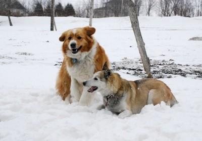 2dog.jpg